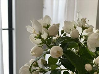 初夏の花会